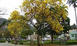 Caratinga - Caratinga-MG-Ipê amarelo na praça-Foto:@MohammadAlberth