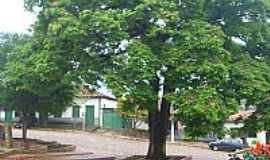 Carbonita - Carbonita-MG-Árvore Sapucaia na praça central-Foto:otavio martins