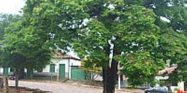 Carbonita-MG-Árvore Sapucaia na praça central-Foto:otavio martins