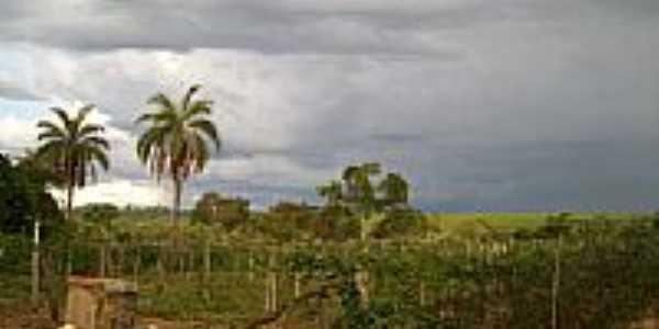 Fazenda Paraiso-Foto:jcantunescp