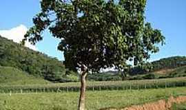 Coimbra - Árvore no barranco da estrada em Coimbra-MG-Foto:Almerindo Lana