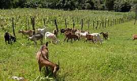 Cônego Marinho - Cônego Marinho-MG-Pastagem de cabras-Foto:www.mapasbrasil.net