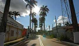 Brasiléia - Brasiléia-AC-Palmeiras na rua da Prefeitura-Foto:Jezaflu Jesus