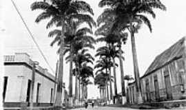 Brasiléia - Palmeiras foto do site da PMB