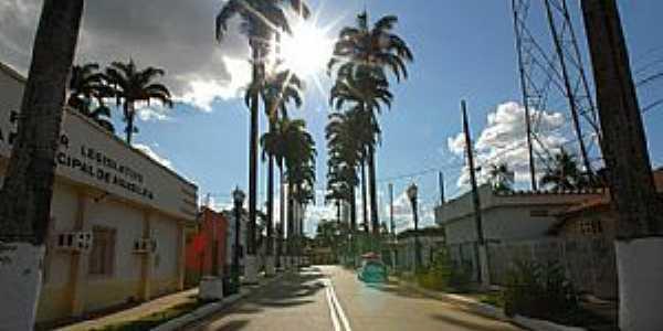Brasil�ia-AC-Palmeiras na rua da Prefeitura-Foto:Jezaflu Jesus