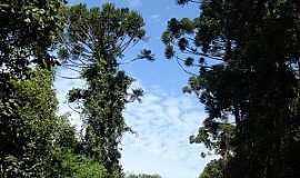 Crisólia - Crisólia-MG-Trilha na floresta-Foto:JoBaAm