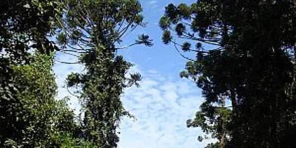 Crisólia-MG-Trilha na floresta-Foto:JoBaAm