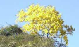 Cristália - Ipê Amarelo, Por Pr. Cláudio Pereira