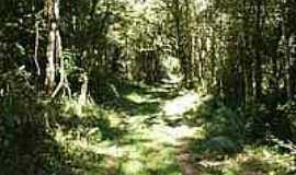 Cristina - Floresta Atlântica-Foto:sperandelli [Panoramio]