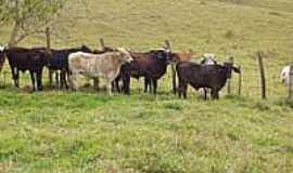 Desterro do Melo - Gado na pastagem-Foto:antoniodacostalima [Panoramio]