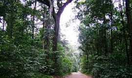 Laranjal do Jari - Laranjal do Jarí-AP-BR-156 na Floresta Amazônica-Foto:Alan Kardec