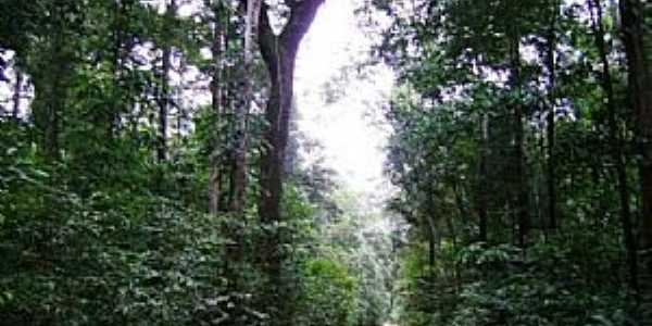 Laranjal do Jarí-AP-BR-156 na Floresta Amazônica-Foto:Alan Kardec