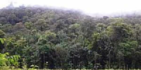 Lourenço-AP-Vista da vegetação-Foto:Alan Kardec