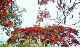 Dores do Indaiá - Dores do Indaiá-MG-Flamboyant no centro da cidade-Foto:Dione Fernandes-Facebook