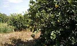 Douradoquara - Douradoquara por C&S Antenas
