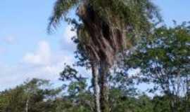 Douradoquara - Vegetação Típica, Por Sandoval