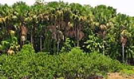 Mazagão - Mazagão-AP-Vegetação à beira do Rio Mazagão-Foto:André Bonacin2