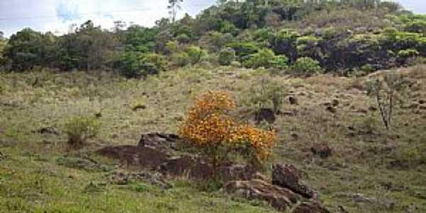 Estevão de Araújo-PE-Flores no pé da Serra-Foto:J Araújo