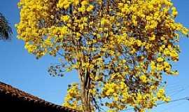 Fel�cio dos Santos - Fel�cio dos Santos-MG-Lindo Ip� amarelo-Foto:Wilson Fortunato