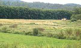Florestal - Colheita de Arroz, por Walter Mewes