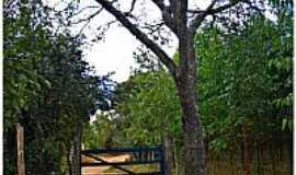 """Formiga - Formiga-MG-�rvore""""Pau-de-�leo""""na entrada da comunidade""""Moita Fria""""-Foto:Aender M. Ferreira"""