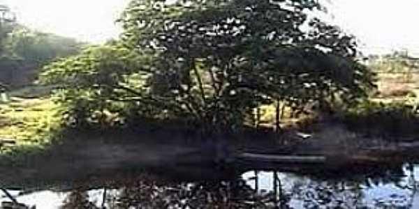 Pracuúba-AP-Árvore Pracuubeira na margem do Lago-Foto:casteloroger.blogspot.com.br