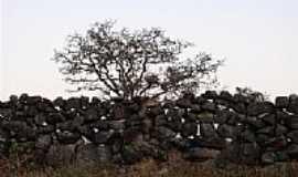 Gouveia - Muro de pedras em Gouveia-Foto:geoglauco