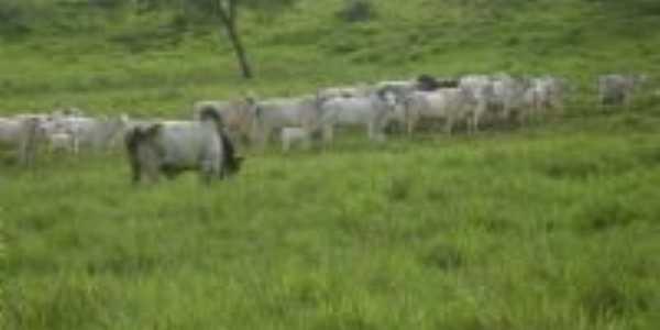 o pasto em guaranilandia , Por ivone ferreira da silva