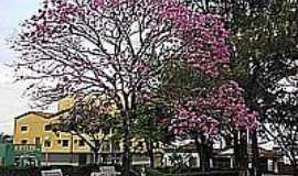 Guimarânia - Ipê roxo na praça da Matriz-Foto:tarciso [Panoramio]