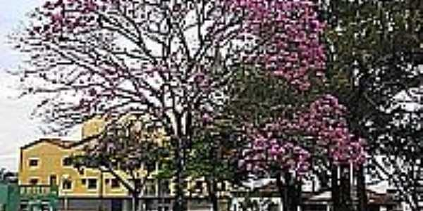 Ipê roxo na praça da Matriz-Foto:tarciso [Panoramio]