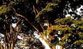 Ibertioga - Por Elaine Vieira Vieira