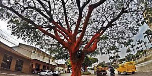 Inconfidentes-MG-Árvores recobertas em crochê na Avenida principal-Foto:natrilhas.com.br