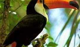 Itajub� - Tucano - Fauna preservada