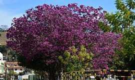 Itamonte - Itamonte-MA-Árvores floridas ao lado da ponte-Foto:Celso Ortolan