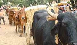 Jacarandira - Carro de boi na festa da colheita-Foto:Renácio
