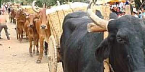 Carro de boi na festa da colheita-Foto:Renácio