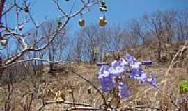 Jana�ba - Jana�ba-MG-Flores da caatinga-Foto:FSathler