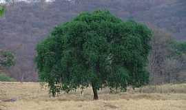 Juramento - Juramento-MG-Linda árvore no pé da serra-Foto:Fotos Paisagens