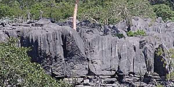 Levinópolis-MG-Árvore em meio as rochas-Foto:RENATO LOPES's.