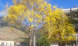 Luisburgo - ipes floridos na pra�a da cidade ip� amarelo, Por Roberto Pacheco