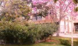 Luisburgo - ip� rosa florido na pra�a da cidade, Por Roberto Pacheco