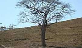 Machacalis - A Árvore