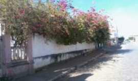 Manga - Azaleia decorando o muro do Casarão-Foto:Carlos Cabral/Rj