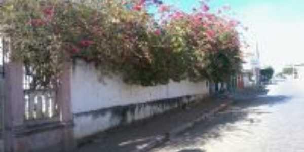 Azaleia decorando o muro do Casarão-Foto:Carlos Cabral/Rj