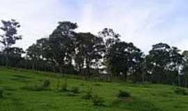 Maravilhas - Vegetação-Foto:Délio Lemos