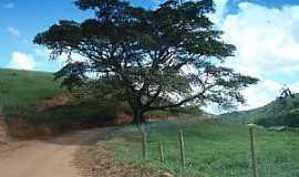 Marilac - Marilac-MG-Figueira centenária na estrada da cidade-Foto:Izaides