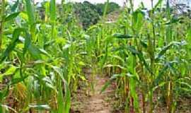 Missionário - Plantação de milho-Foto:Michael R. Silva