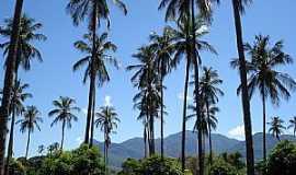 Monte Azul - Monte Azul-MG-Coqueiral no povoado de Pajeú-Foto:Edivaldo Fernando dos Anjos