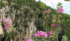 Monte Azul - Monte Azul-MG-Flor do cerrado na Serra do Espinhaço-Foto:Edivaldo Fernando dos Anjos