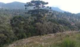 Monte Verde - Por milena  baptista